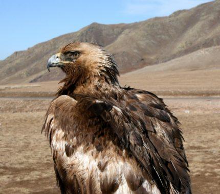 Expedition-Trust-GoldenEagle